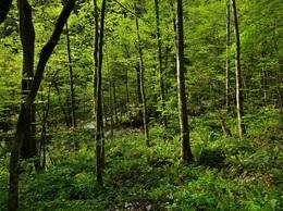 森の中には動物がいっぱい