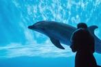 辛酸なめ子『ヌルラン』盛況イベント第2弾 守護霊のイルカが2019年を占う
