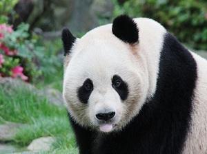 トークイベント『動物園図鑑』 第2弾のテーマはパンダ